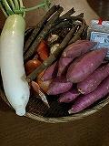 s25-野菜.jpg