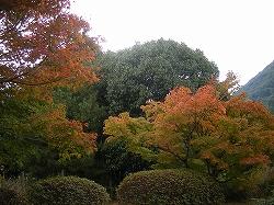 s25-1105相撲場.jpg