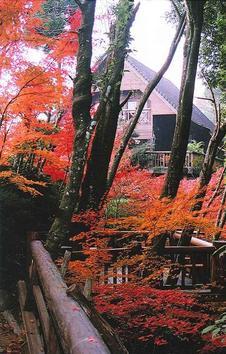 秋には、美しく色づいた紅葉も堪能できます。