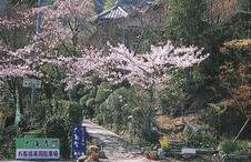 駐車場より桜花の石畳を経て、六角堂へ入口です。