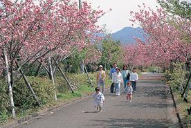 桜ヶ丘公園 (曲川神社)