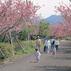 桜ヶ丘公園(曲川神社)