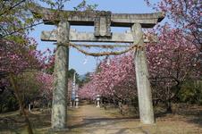 4月には、八重桜が咲き誇り、お花見を楽しむことができます。