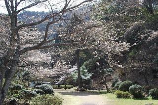 桜100317 002.jpg