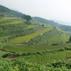 Terraced Rice Fields of Take