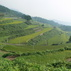 Terraced Rice Fields of Take