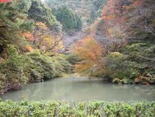 秋は紅葉が満開に。