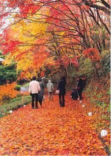 秋には素晴らしい紅葉スポットに。