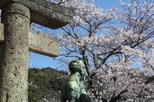 春には、約500本の桜がきれいです。