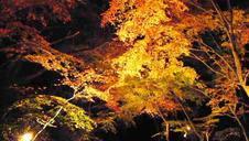 「秋の有田陶磁器まつり」期間中は、夜間のライトアップも。昼とは違った雰囲気を味わえます。