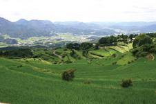 豊かな緑の田園風景です。