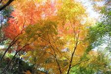 11月に開催される「秋の有田陶磁器まつり」期間中に限り、一部が開放され、美しい紅葉をお楽しみいただけます。