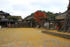 秋には辺り一面が黄色の絨毯に。