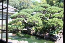 推定樹齢350年の〔五葉松〕立派な枝ぶりが見るものを圧倒します。<br/><small><small>※一般公開は致しません。<small><small>