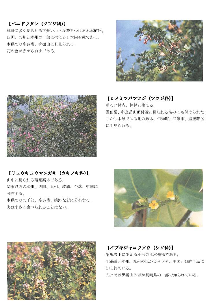 黒髪山の植物5trpng.png