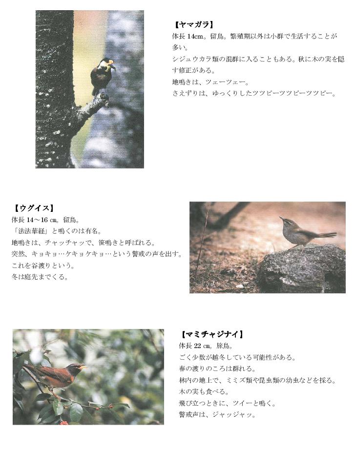 黒髪山の野鳥1tr.png
