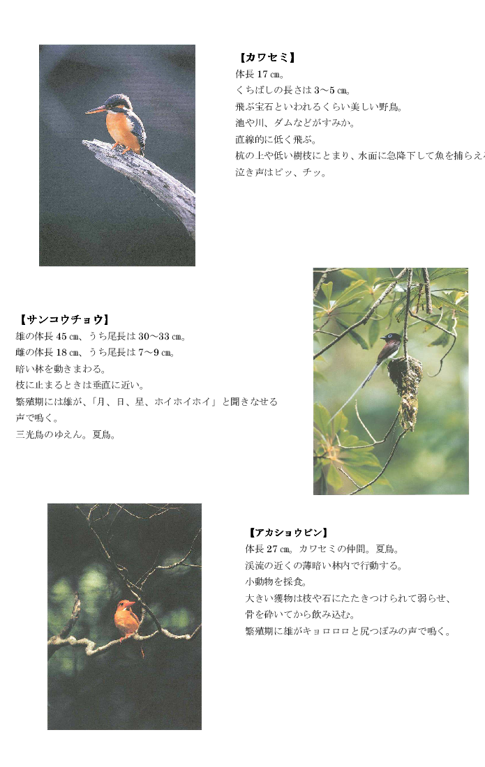 黒髪山の野鳥2tr.png