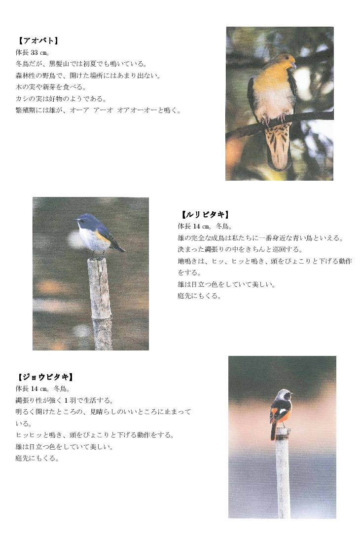 黒髪山の野鳥3tr.png
