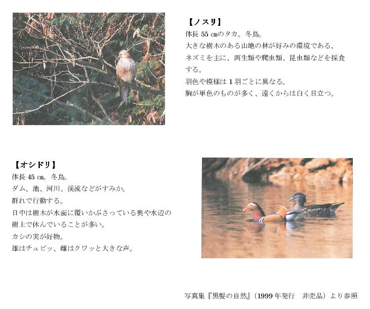 黒髪山の野鳥4tr.png